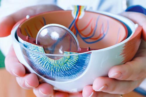 plastikowy narząd wzroku